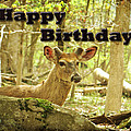 Birthday Greeting Card - Whitetail Deer Buck In Velvet by Mother Nature