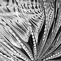 Black - White by Jan Canavan
