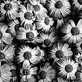 Black And White Flowers by Sumit Mehndiratta