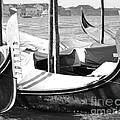 Black And White Gondolas Venice Italy by Rebecca Margraf