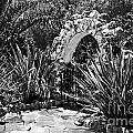Black And White Mexican Patio With Stone Arbor San Diego California Usa by Sherry  Curry