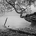 Black And White Mystic Lake by Andre Distel