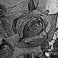 Black And White Rose Sketch by Barbara Griffin