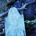 Black Bird Perched On Old Tombstone by Jill Battaglia
