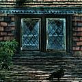 Black Birds Sitting On Roof By Window by Jill Battaglia