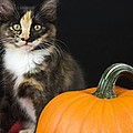 Black Calico Kitten With Pumpkin by Gregory Dean