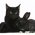 Black Cat And Rabbit by Mark Taylor