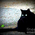 Black Cat Beauty by Lainie Wrightson