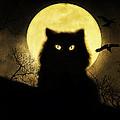Black Cat by Hazel Billingsley