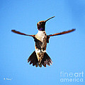 Black-chinned Hummingbird Flying by Roena King