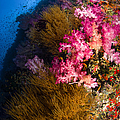 Black Coral And Soft Coral Seascape by Todd Winner