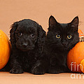 Black Kitten & Puppy With Pumpkins by Mark Taylor