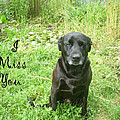 Black Lab Miss You by Aimee L Maher ALM GALLERY