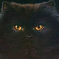 Black Persian by Andrew Farley