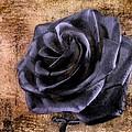 Black Rose Eternal   by David Dehner
