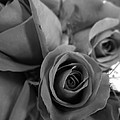 Black Roses by Christopher Kerby