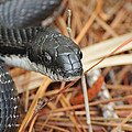 Black Snake by Paul Ward