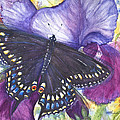 Black Swallowtail Butterfly by Patricia Allingham Carlson