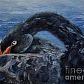 Black Swan by Brenda Thour