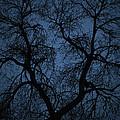 Black Veined Sky by Loren Rye