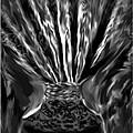 Black Velvet by Sherri's - Of Palm Springs