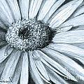 Black White Gerber by Phyllis Howard