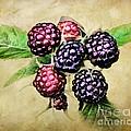 Blackberries Portrait by Susan Isakson