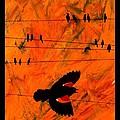 Blackbird by Jim Harris