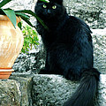 Blacky Cat by Colette V Hera  Guggenheim
