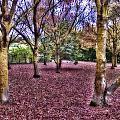 Blanket Of Leaves by Douglas Barnard
