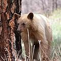 Blonde Bear by Amara Roberts