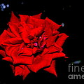 Blood Rose by Catherine Conroy