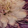 Bloom by Phil Pantano