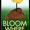 Bloom Where You Are Planted Poster by Tim Nyberg