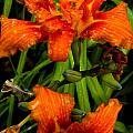 Bloomers by Renate Nadi Wesley