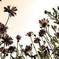 Blooming Above 2 by Sumit Mehndiratta