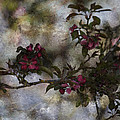 Blooming Branches by Bonnie Bruno