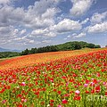 Blooming In The Plateau by Tad Kanazaki