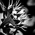 Blooming Sunflower by Hakon Soreide