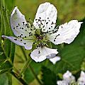 Blooming by Tisha Clinkenbeard