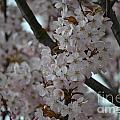 Blossom by Art Kleisen