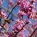 Blossoming Bird by Lynn Bauer