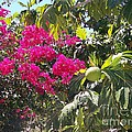 Blossoms And Breadfruit by Greg Hammond