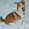 Blue - Siberian Husky Dog Painting by Patricia Barmatz