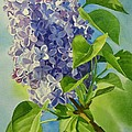 Blue And Lavender Lilacs by Sharon Freeman