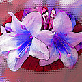 Blue And Red Weigela Window by Debbie Portwood