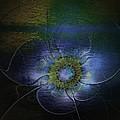 Blue Anemone by Amanda Moore