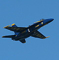 Blue Angel Solo by Samuel Sheats