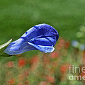 Blue Beacon by Susan Herber
