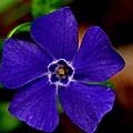Blue Beauty by Danielle Del Prado
